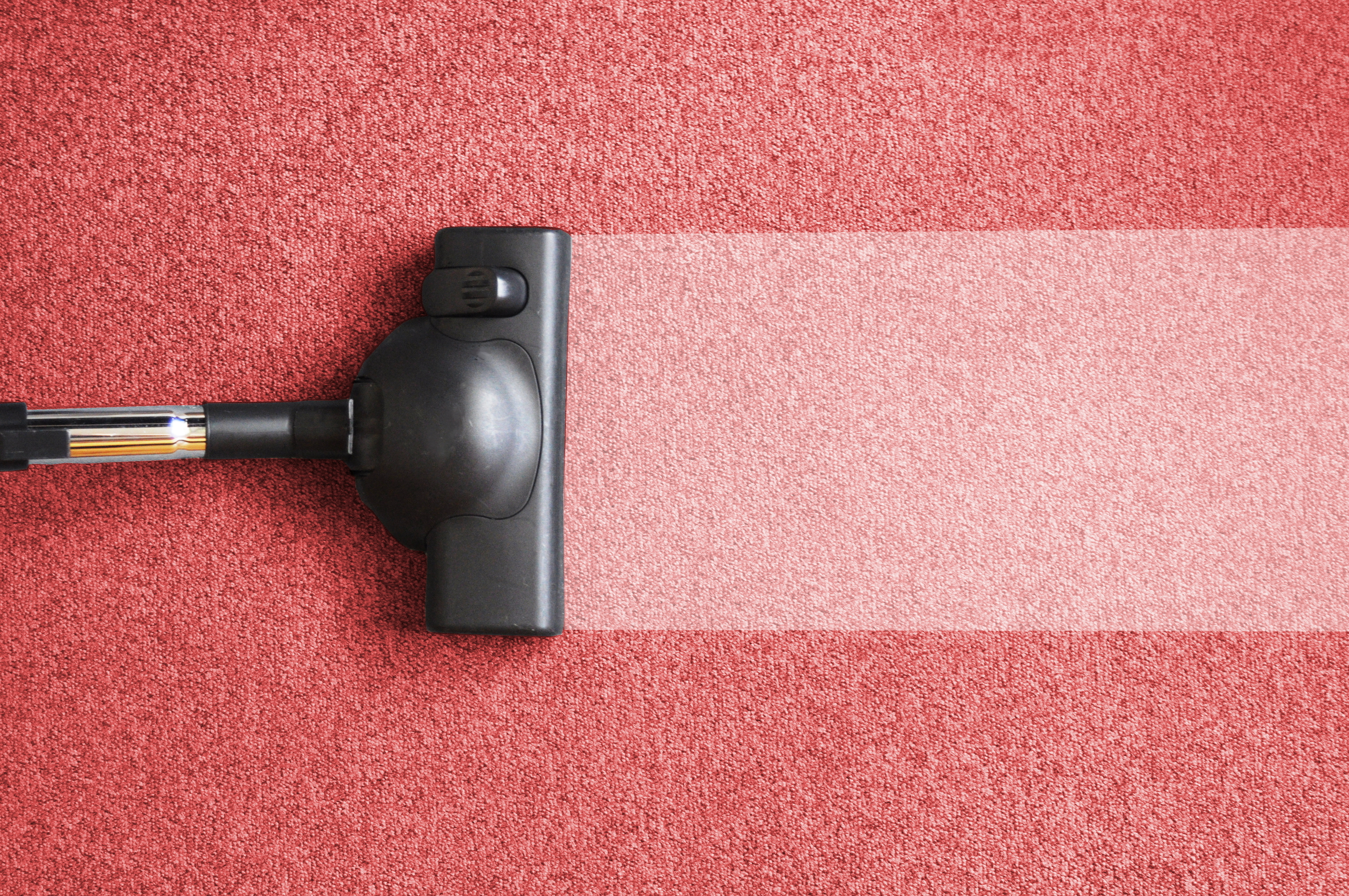 Carpet Cleaning Service in NJ Offers a Look at What's Living in your Carpet
